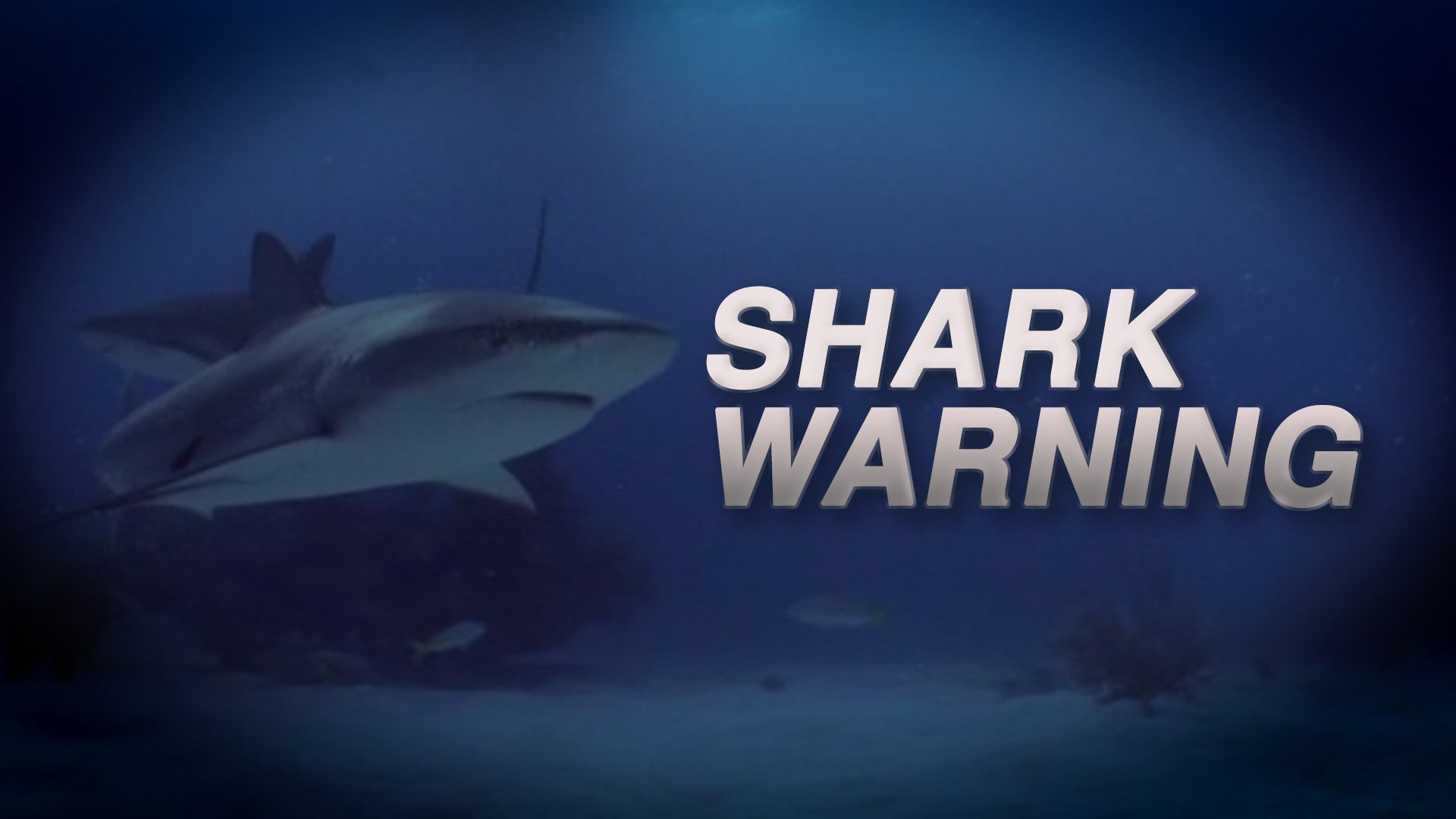An update on the Lake Macquarie shark attack which occurred late yesterday: the man was swimming at Yarrawonga Park about 6.30pm when he was bitten on the